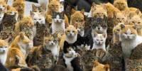Un paraiso Felino: La isla de los Gatos