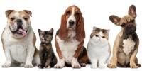7 Mitos sobre los perros que no conocias